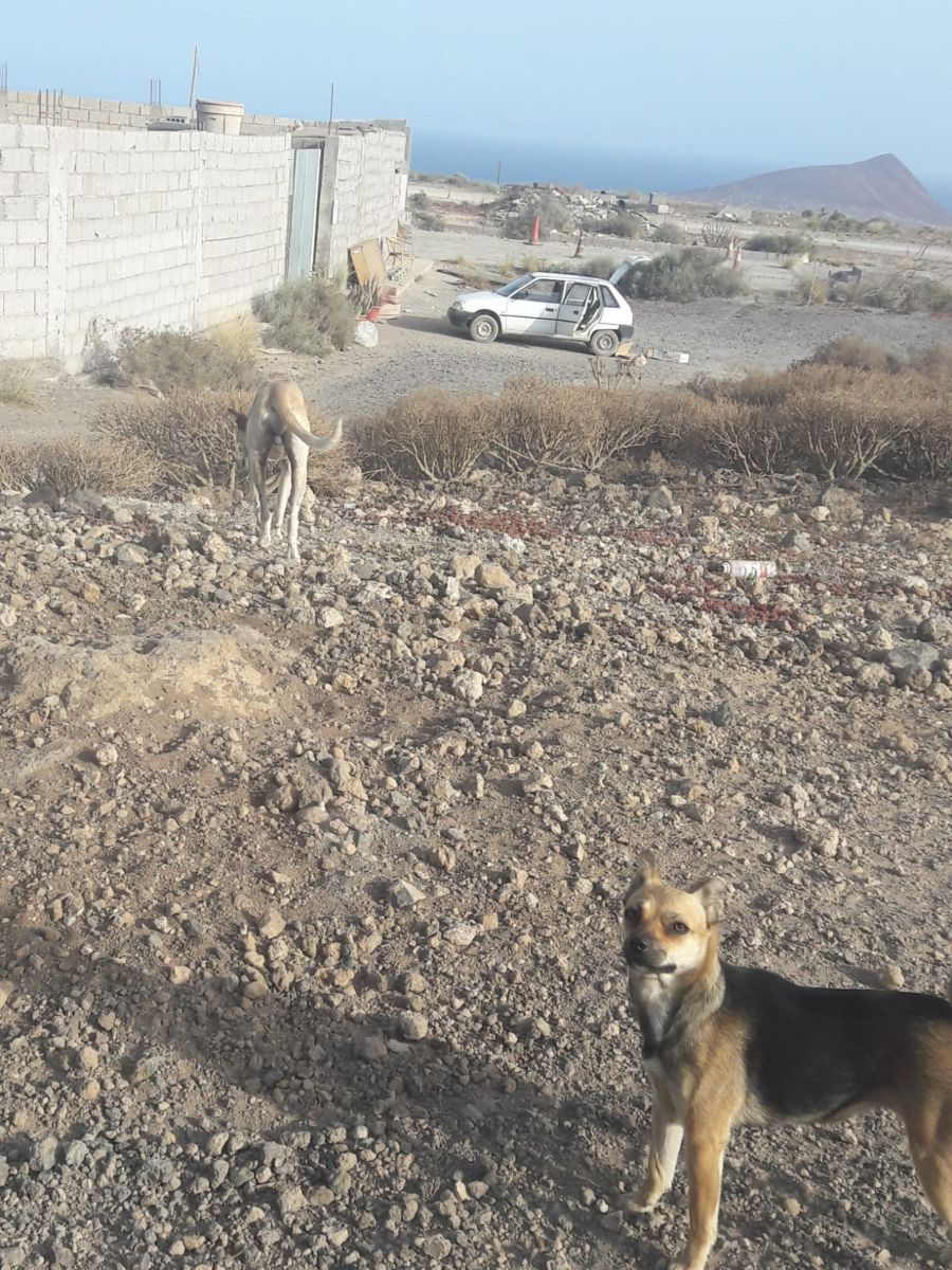 Perros en San Isidro_840