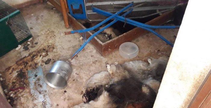 Encuentran 12 perros muertos en el interior de una casa durante su desahucio