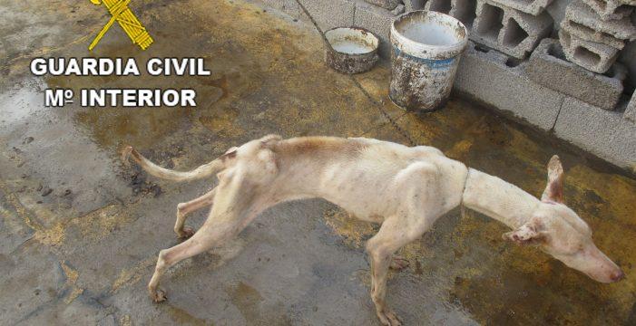Detenido por tener en pésimas condiciones a cinco perros en la azotea de su casa en Lanzarote