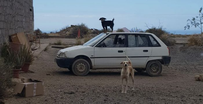 PACMA denuncia la situación de abandono de casi un centenar de perros en una finca de San Isidro