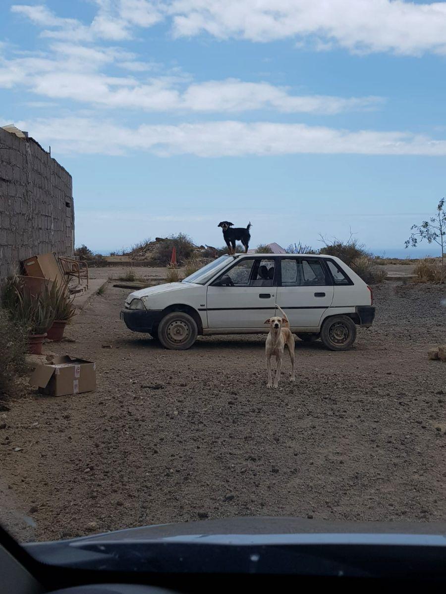 perros en san isidro 4_843