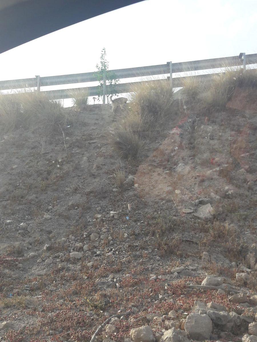 perros en san isidro cerca autopista_844