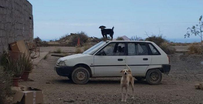 Una señora mantiene desatendido a un centenar de perros en San Isidro