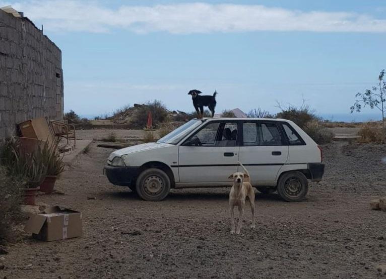Perros en San Isidro. | DA