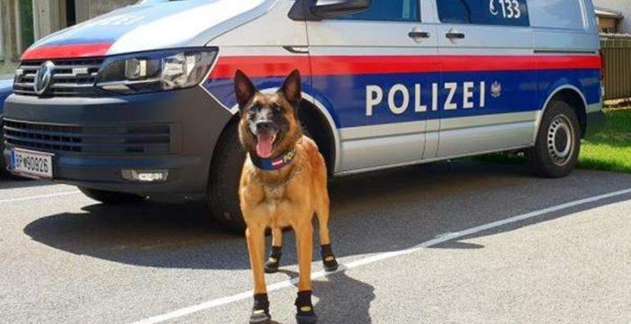 Ponen zapatos a los perros para evitar que se quemen con el asfalto