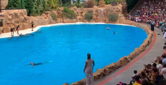 Tres animalistas saltan al agua en pleno show de delfines en Loro Parque