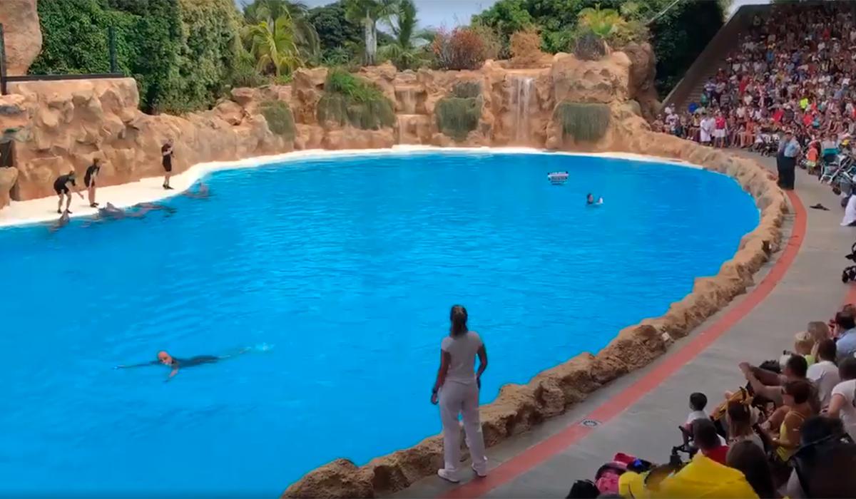 Tres Animalistas Saltan Al Agua En Pleno Show De Delfines