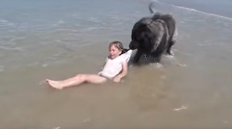 El perro, rescatando a la niña. / YOUTUBE