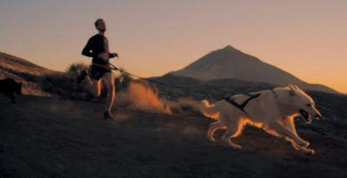 Con perros lobo y trineo, en Tenerife como en Islandia