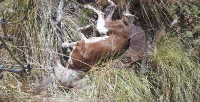 Detenido en El Rosario por matar a un perro con una azada. / EP