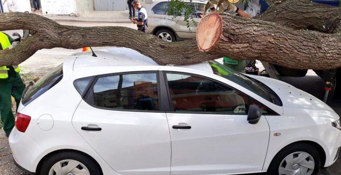 La caída de una rama de grandes dimensiones en La Laguna causa daños en varios vehículos