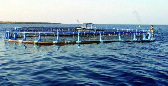 Canarias cuadruplicará su actual producción de acuicultura