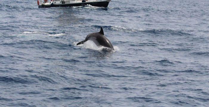 La pasividad de Turismo amenaza uno de los santuarios mundiales de cetáceos