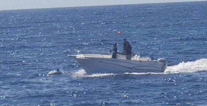 Los barcos legales exigen un tope de licencias para avistar cetáceos
