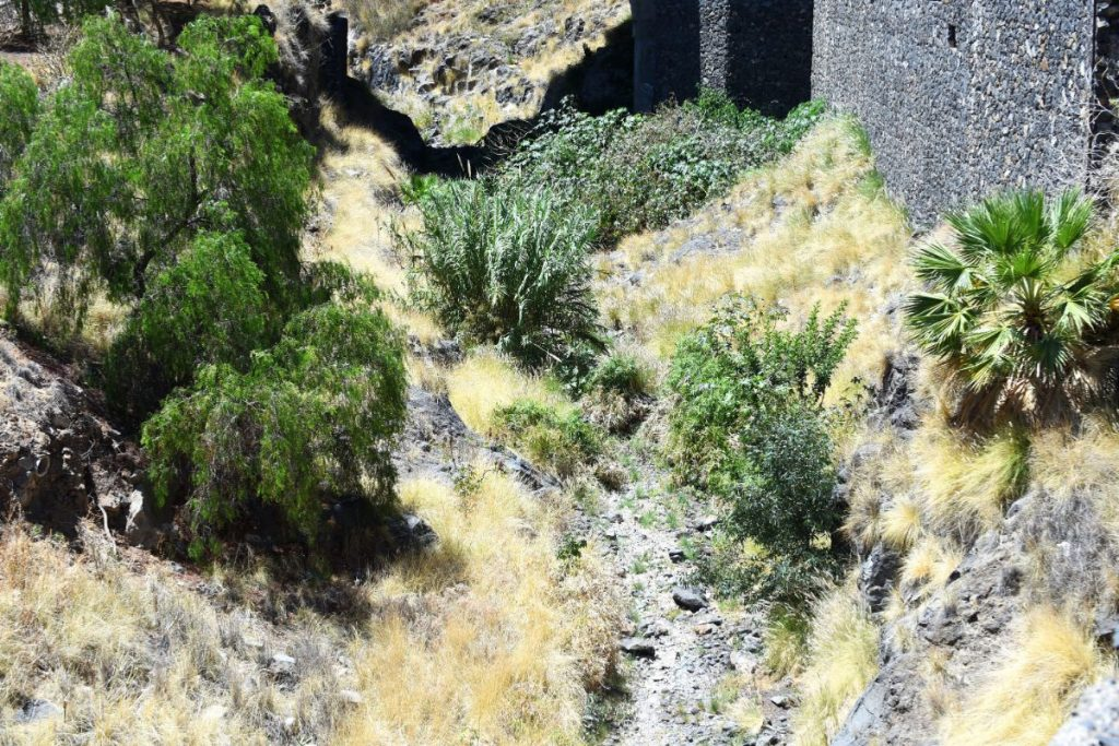 La maleza ha poblado buena parte del cauce del barranco de Santos. S. Méndez