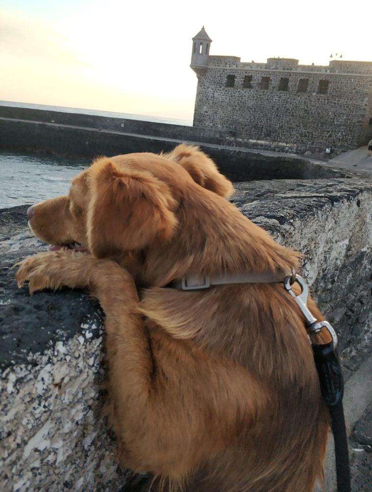La perra se encuentra ahora con una familia de acogida a la espera de ser adoptada. | DA