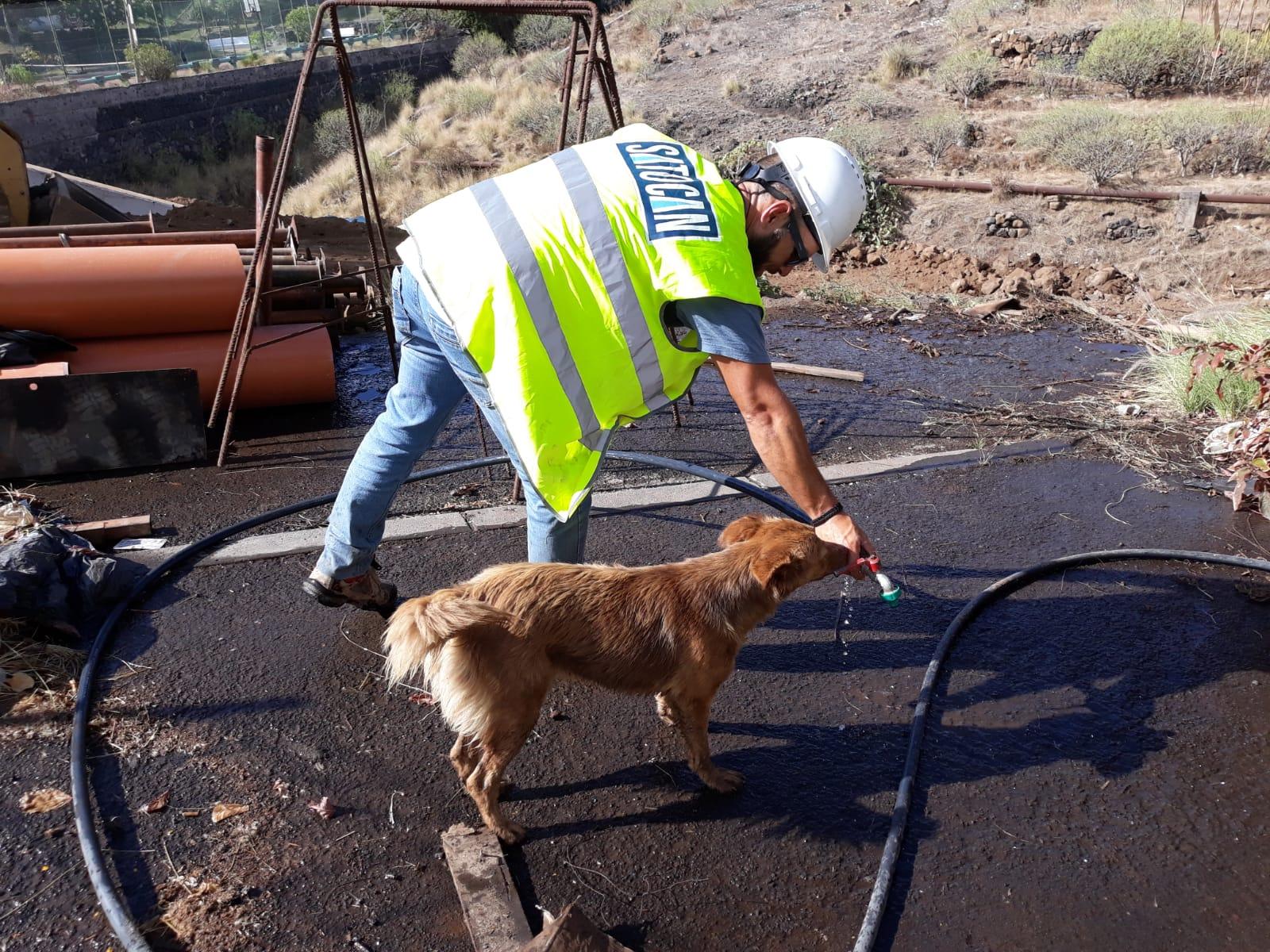La perra junto a los trabajadores en el barranco de Martiánez (Puerto de la Cruz). | DA
