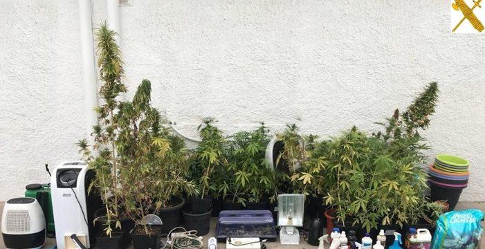 Incautan 96 plantas de marihuana en una casa en Candelaria