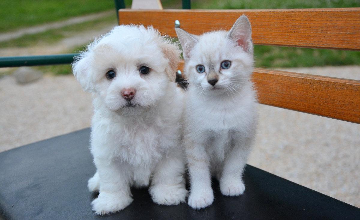 Mascotas, perro, gato
