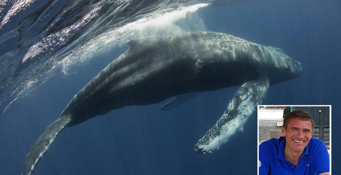 """Sergio Hanquet, el fotógrafo de la ballena yubarta: """"Cuando resopló cerca del barco nos temblaron las piernas"""""""