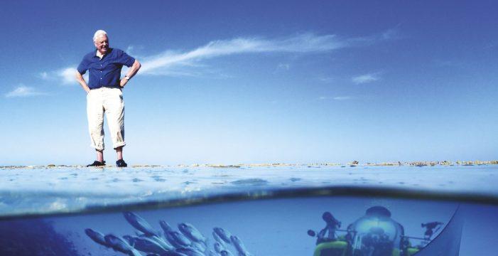 Arona Son Atlántico obtiene los derechos para proyectar la serie La Gran Barrera de Coral, de Attenborough