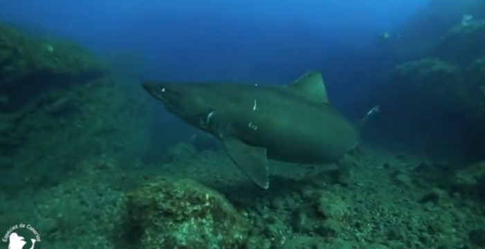 """Felipe, el buzo que grabó al tiburón en El Hierro: """"Me transmitió paz, fue una pasada"""""""
