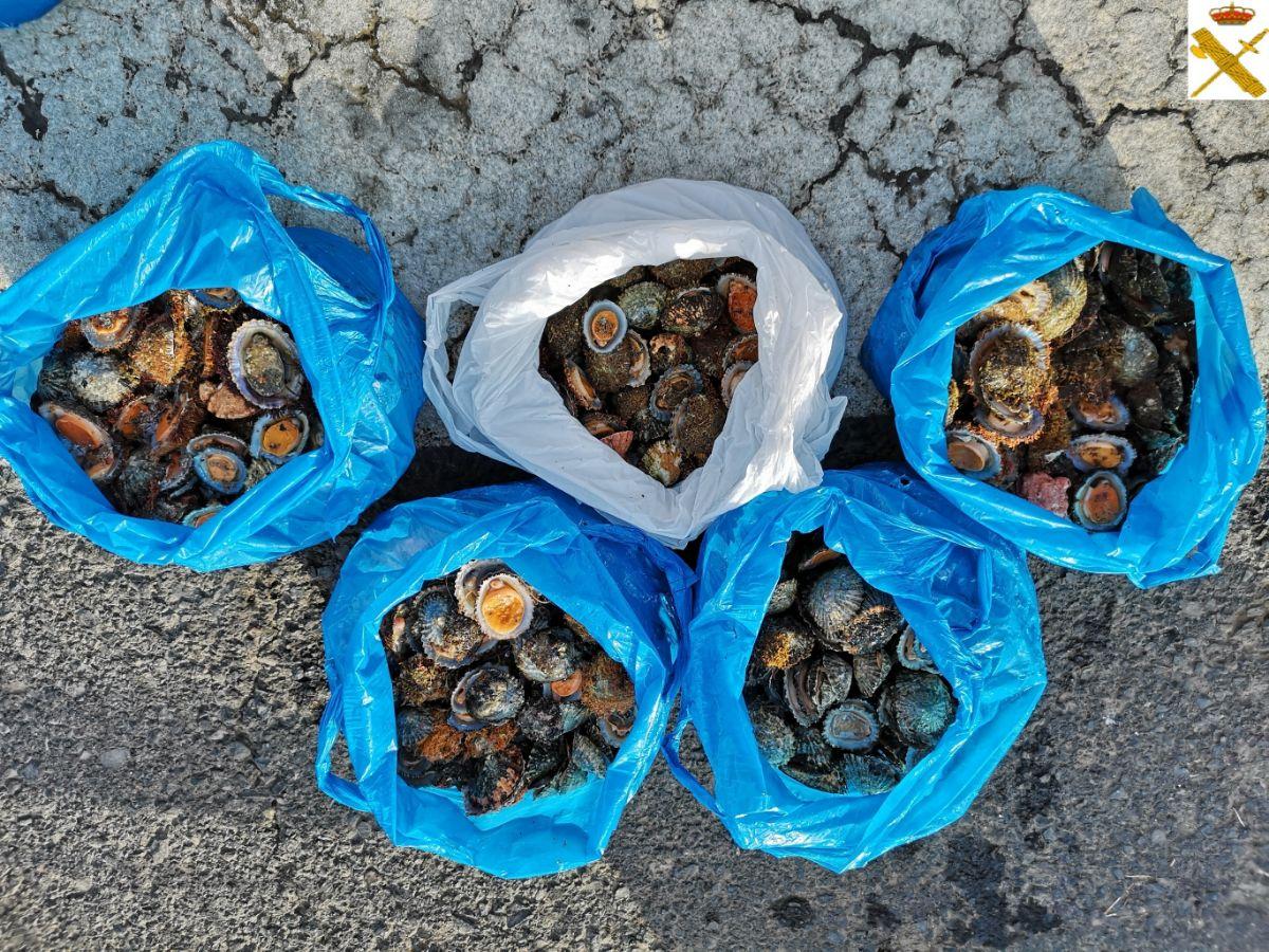 Interceptan en La Gomera 22 kilos de percebes capturados de forma ilegal