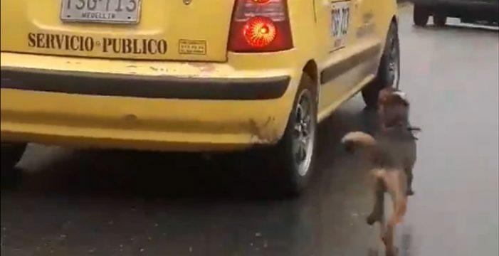 El dramático abandono de un perro que corre desesperado tras el taxi de los dueños