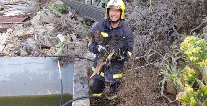Bomberos de La Palma sacan a un perro de un estanque que llevaba dos horas nadando