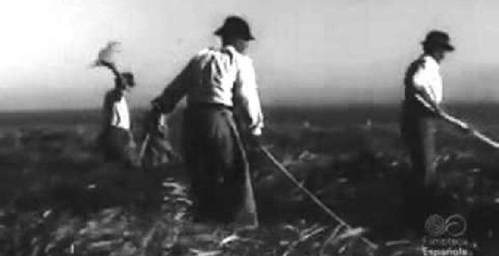 60 años de la última gran plaga de langosta en Tenerife