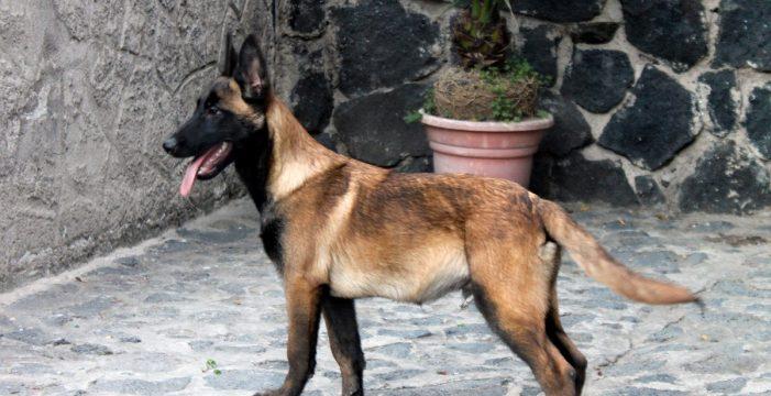 """La investigación del ataque de un perro a un bebé en Fasnia apunta a un """"desgraciadísimo accidente"""""""