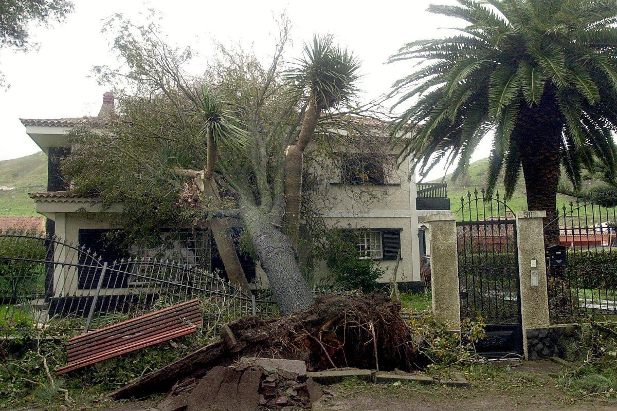 Arbol caido sobre una casa en el Camino de las Peras, La Laguna TORMENTA DELTA