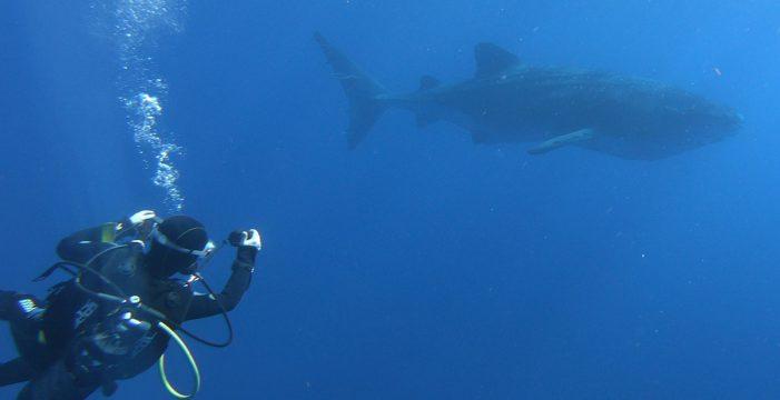"""David, el afortunado que buceó con el tiburón ballena en La Palma: """"Todo transcurría con normalidad hasta que apareció la sombra"""""""