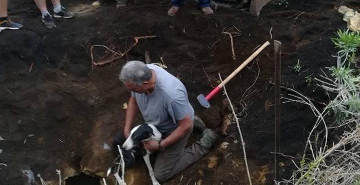 Agónico rescate de dos perros atrapados 3 días bajo tierra en La Palma