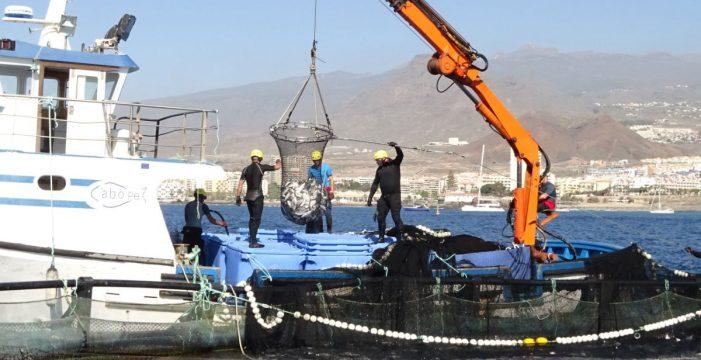 Tenerife exporta la calidad de su acuicultura