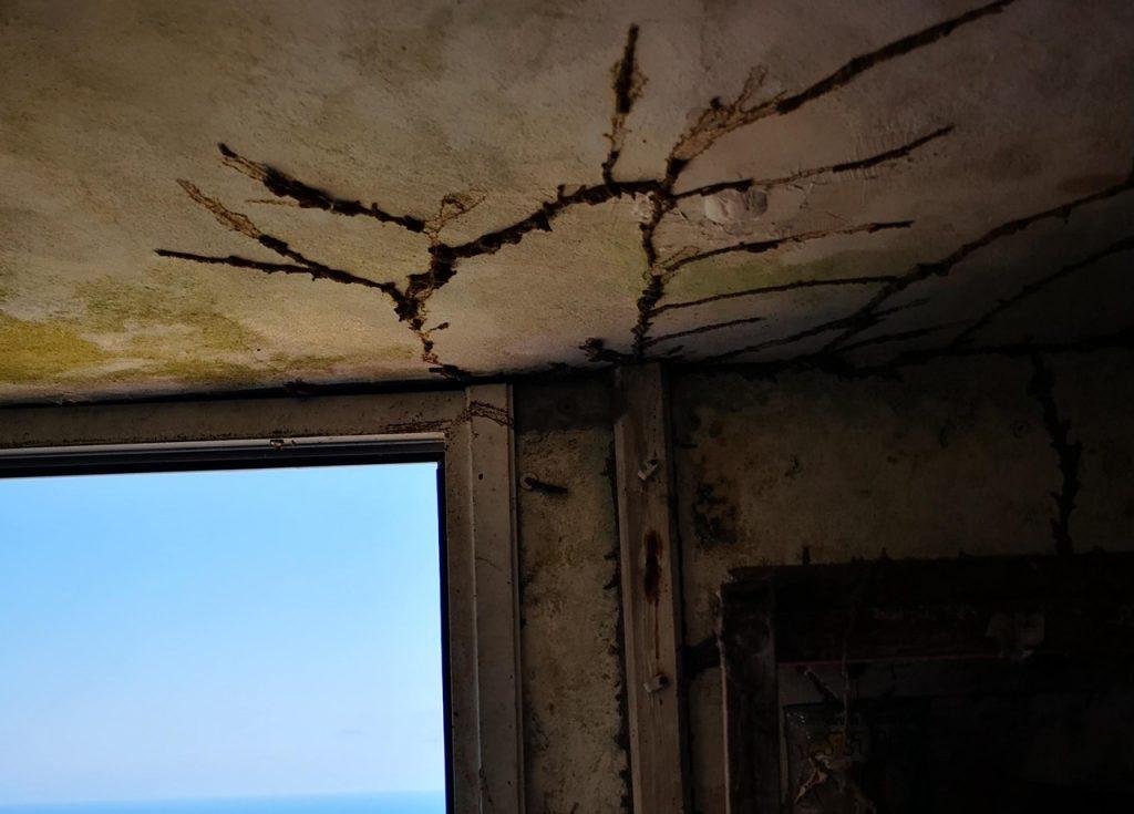 Resultado de imagen de termitas tacoronte