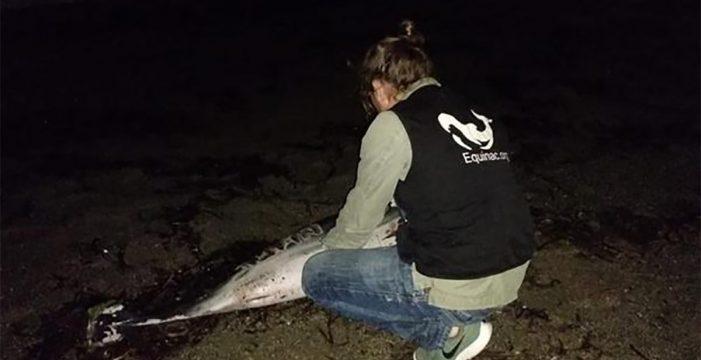 Aparece muerto un delfín en Almería con heridas y el nombre 'Juan' grabado en el costado