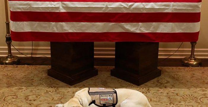 Esta imagen de la mascota de George Bush emociona al mundo