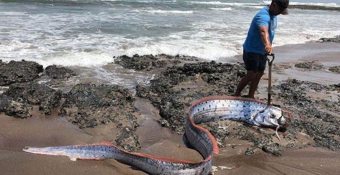 La leyenda del pez remo que ha puesto a temblar a Japón: presagian un tsunami y terremotos
