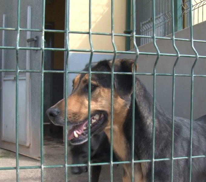 """Adriana Naranjo, presidenta de Fecapap: """"Que los propietarios entreguen a sus perros 'viejitos' es lo más triste de Valle Colino"""""""