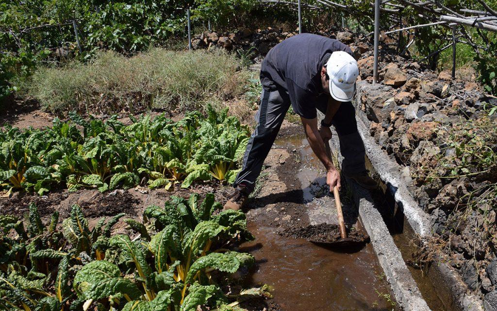 AGUA RIEGO AGRICULTURA CANARIAS