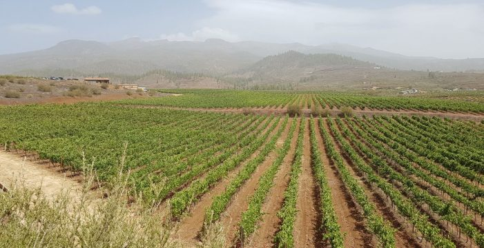 Narvay Quintero inaugura unas jornadas sobre vinos de Canarias