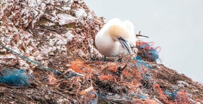 Nuevas investigaciones sugieren que no queda ya ningún ecosistema marino sin contaminar