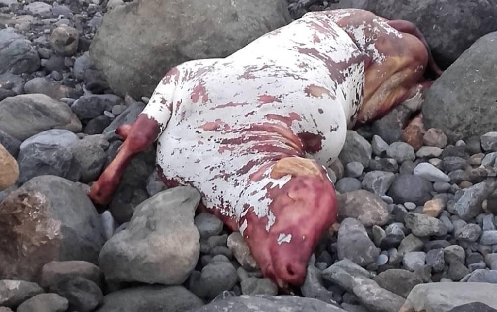 Un segundo toro ha aparecido al ser lanzado desde un 'barco apestoso'| DA