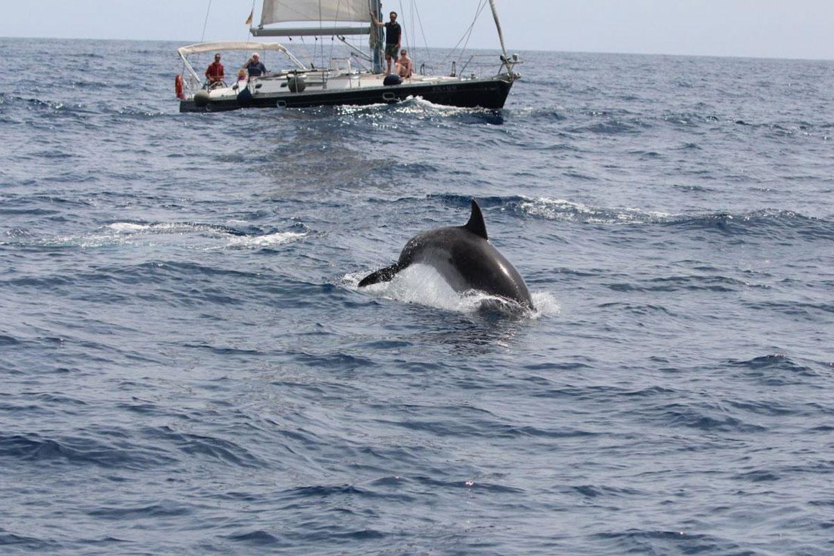 Tenerife paraliza la concesión de licencias para observación de cetáceos