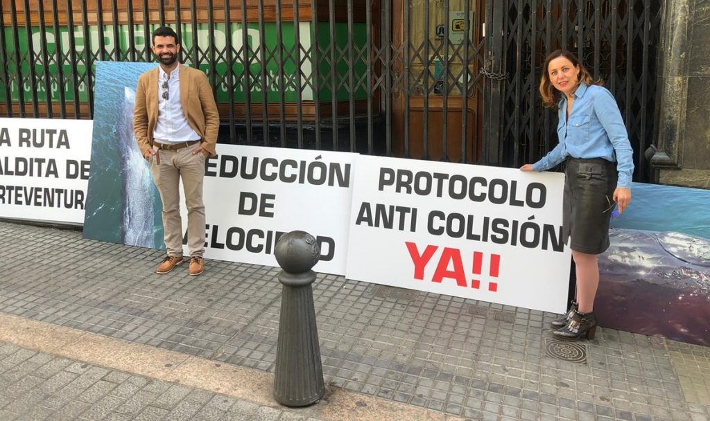 """El Parlamento da luz verde a que se """"supervise y monitorice"""" el cumplimiento de las normas de protección de los cetáceos, pero CC y PSOE evitan que se apruebe el protocolo anticolisiones"""