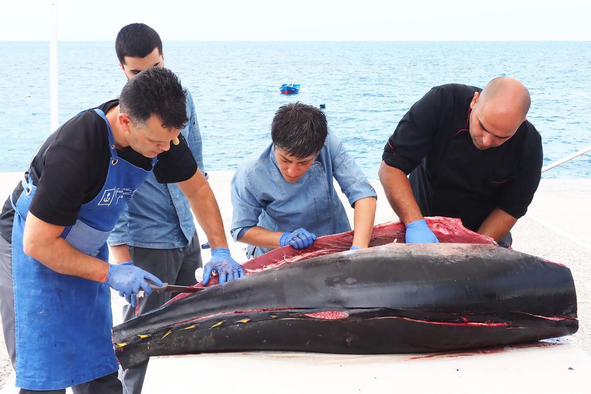 RS639278_sm ronqueo atún 08-scr