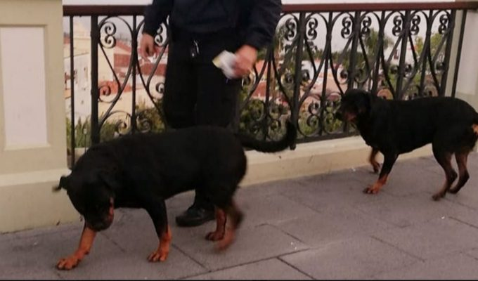 Dos perros Rottweiler siembran el pánico en La Orotava
