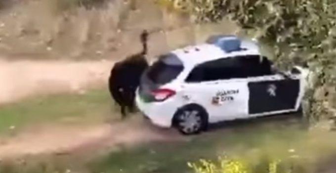 Brutal: un toro ataca a una patrulla de la Guardia Civil