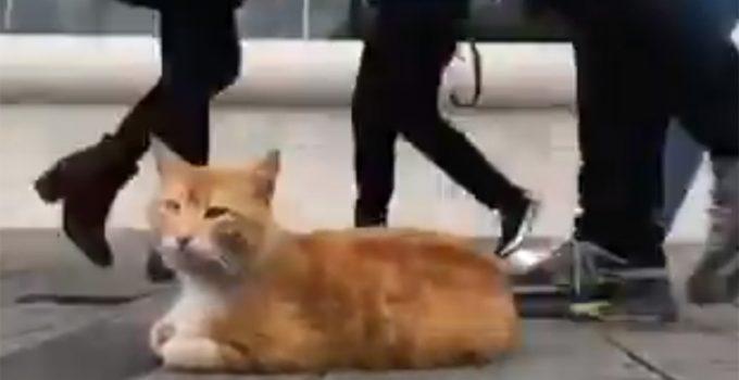 El gato relajado de Estambul que triunfa en Twitter